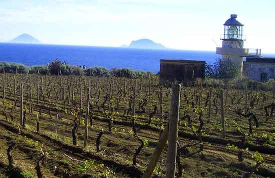 Vineyards in the Aeolian Islands Sicily