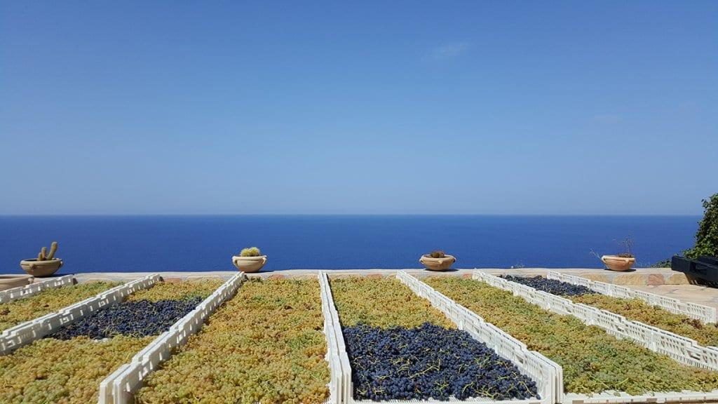 Colosi Vineyards Aeolian islands