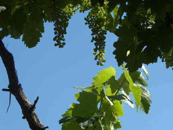 Galicia Wine Country
