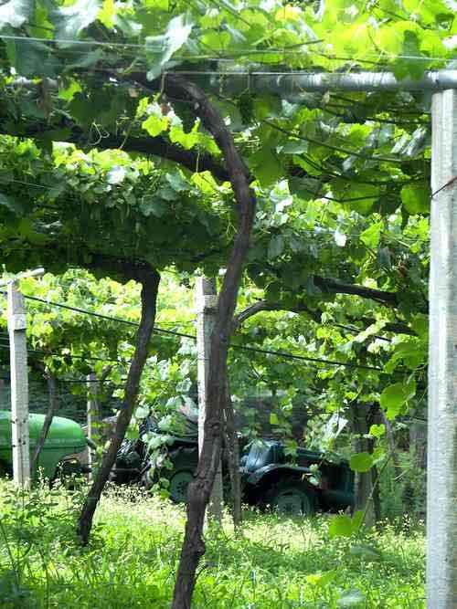 Pazo de Señoráns Wine estate Galicia Spain