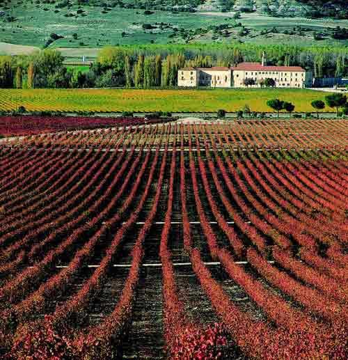 wine tasting camino santiago