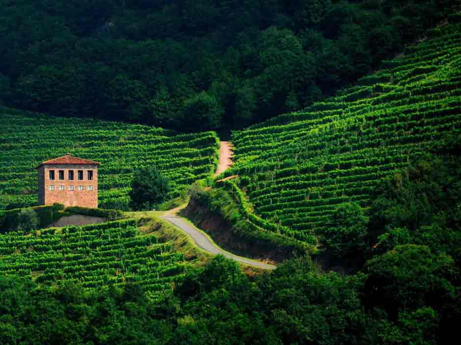 Wines of the Camino French Pays Basque