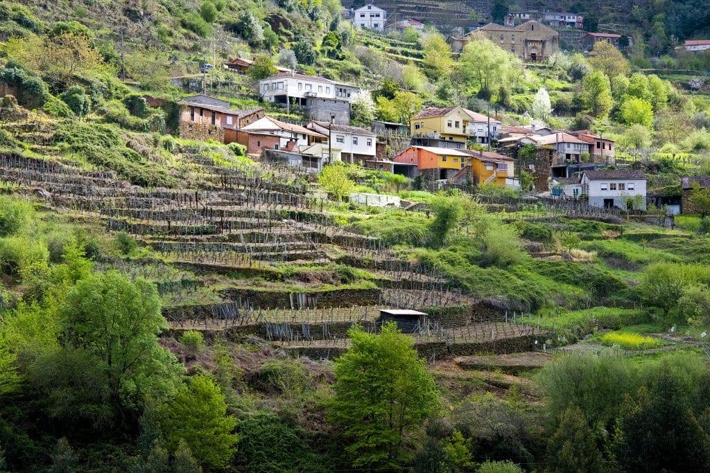 Ribeira Sacra Vineyards