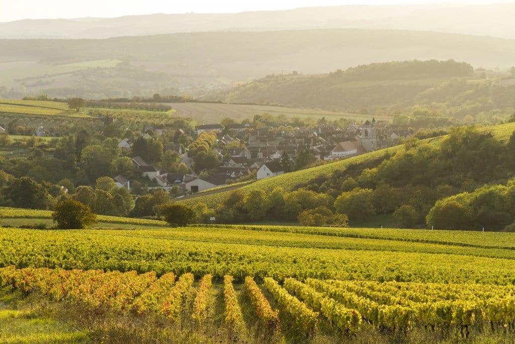 Irancy: Burgundy
