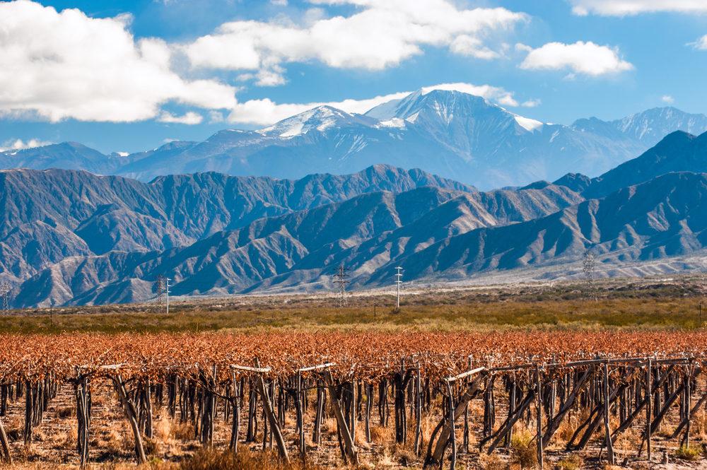 Argentina - Top 10 Icon Wines