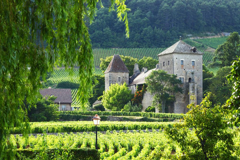 vineyards in Gevrey Chambertin