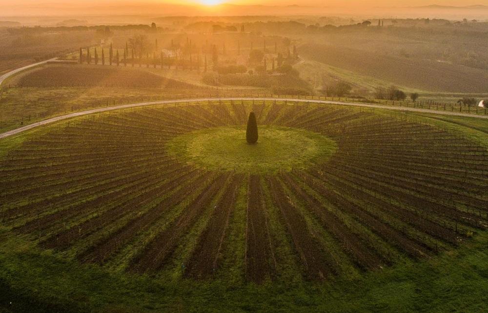 Avignonesi: Tuscan Winery Experiences