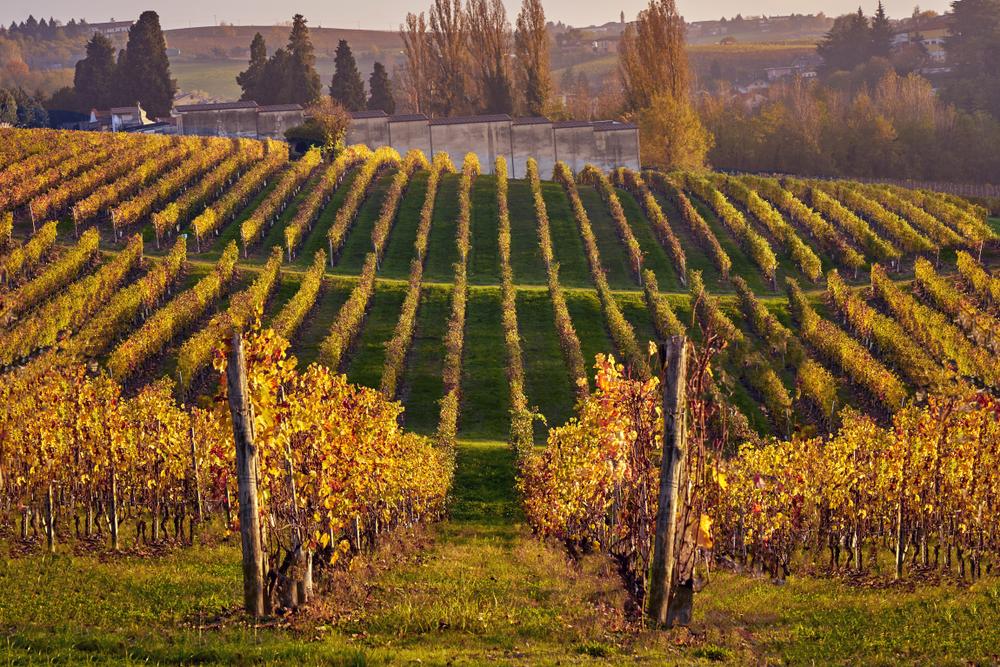Autumn in Piedmont Vineyards