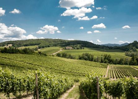 La Raia Winery Estate