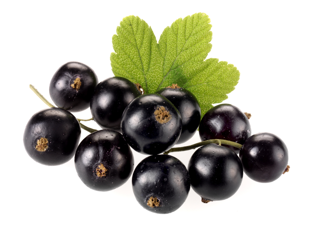Noir de Bourgogne, Blackcurrants