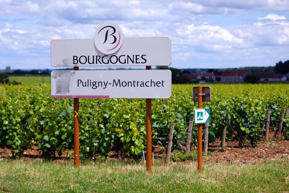 Puligny-Montrachet grand cru vineyard