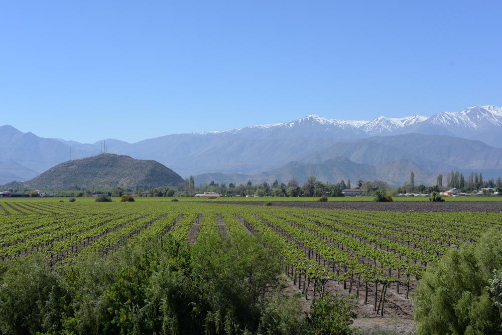 best chilean wines