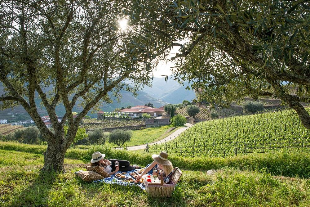 picnic-in-vines