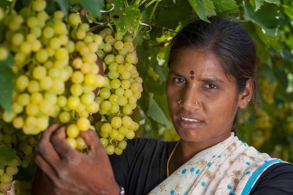india-wine-new-frontier