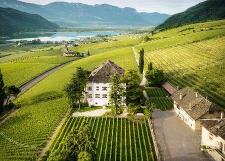 Castel Ringberg Vineyard