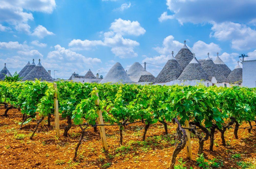 primitivo-wine-puglia