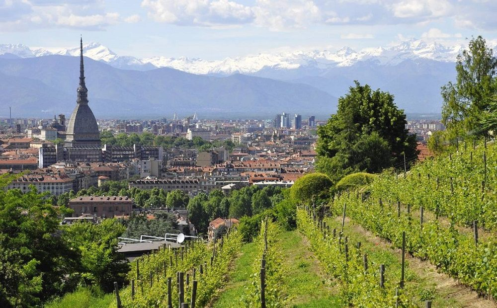 Urban Vineyards in Italy- Hidden Gems for Wine Lovers