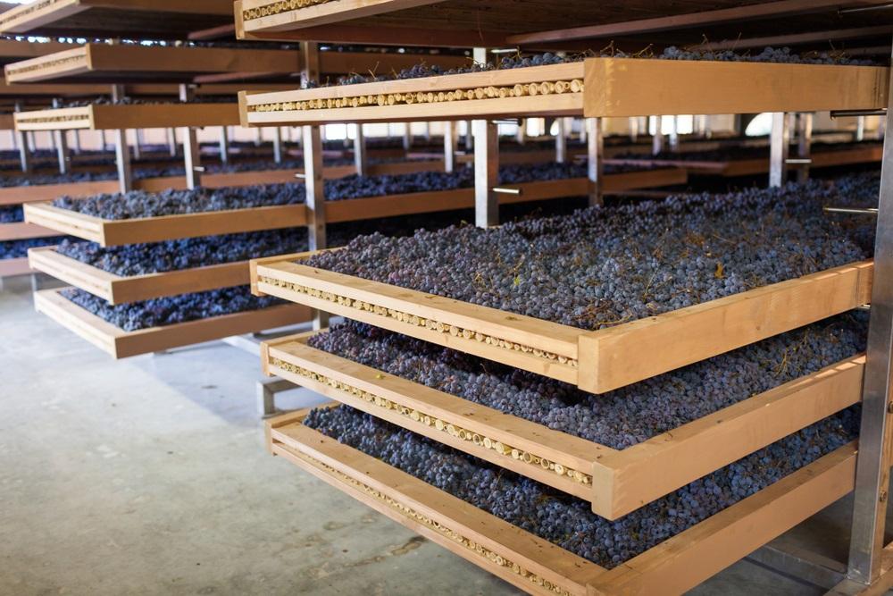 Amarone Wines
