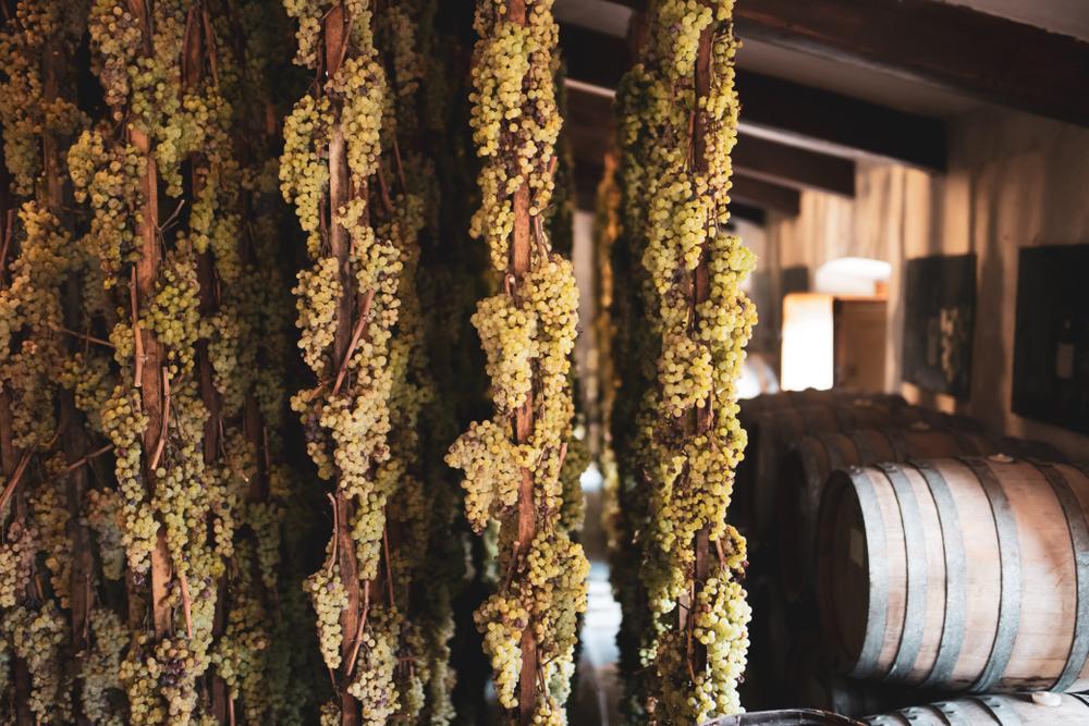 Hanging grapes, Vin Santo