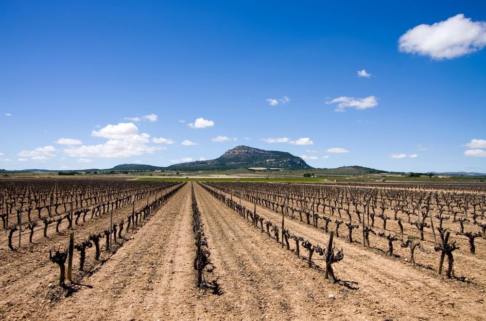 jumilla-vineyards