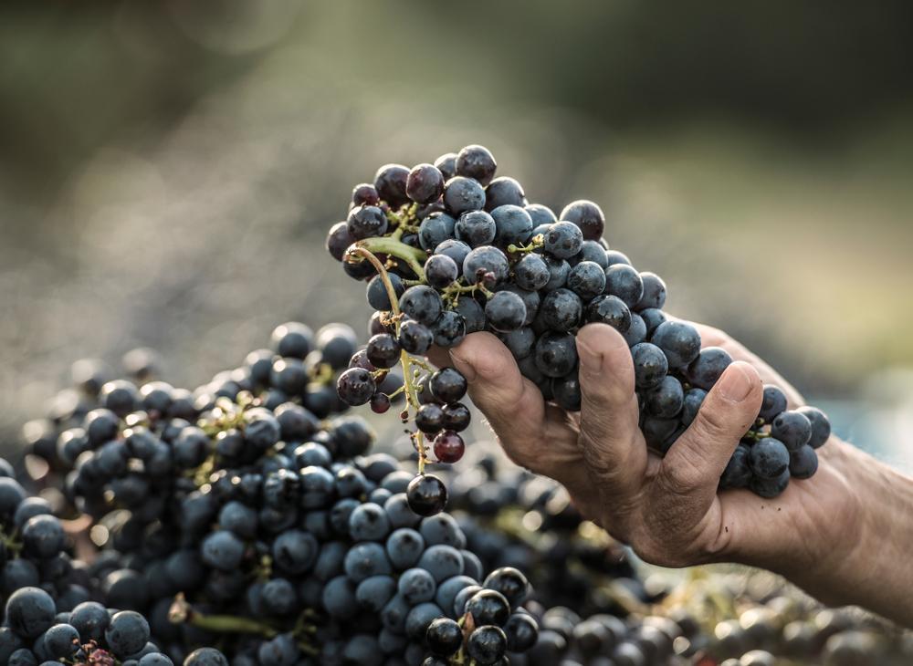 spanish-grape-varities