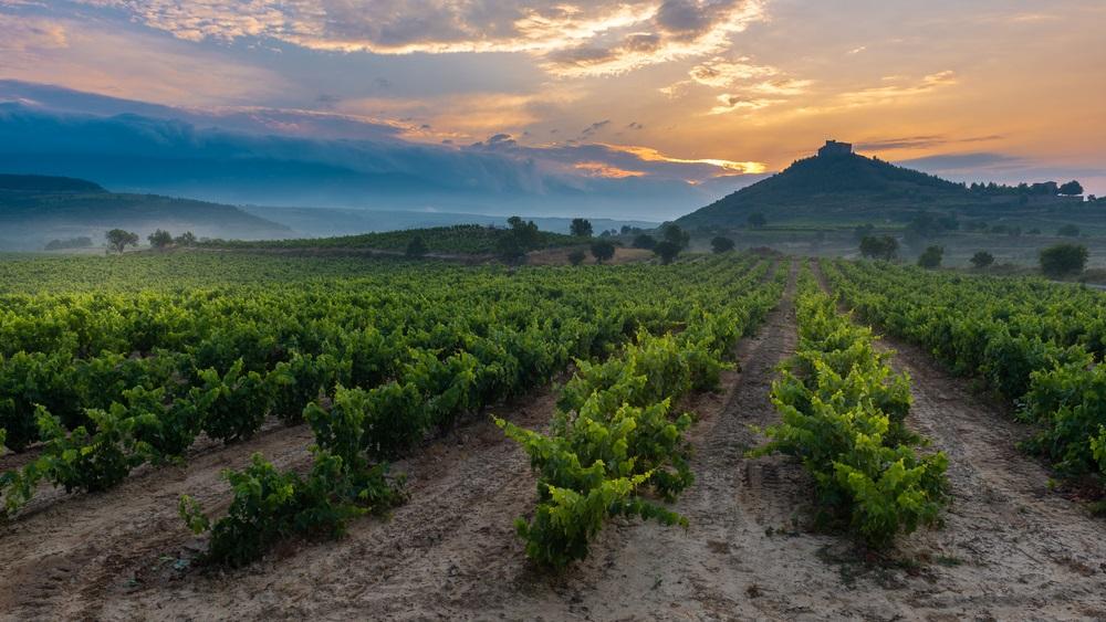 spanish-red-wine