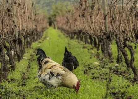 Antiyal Vineyards