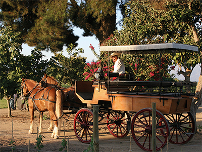 Viu Manent, horse and carriage through the vines