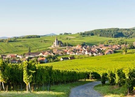 Beautiful vineyards of Haut-Rhin