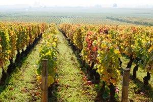 Burgundy vineyards, Beaune