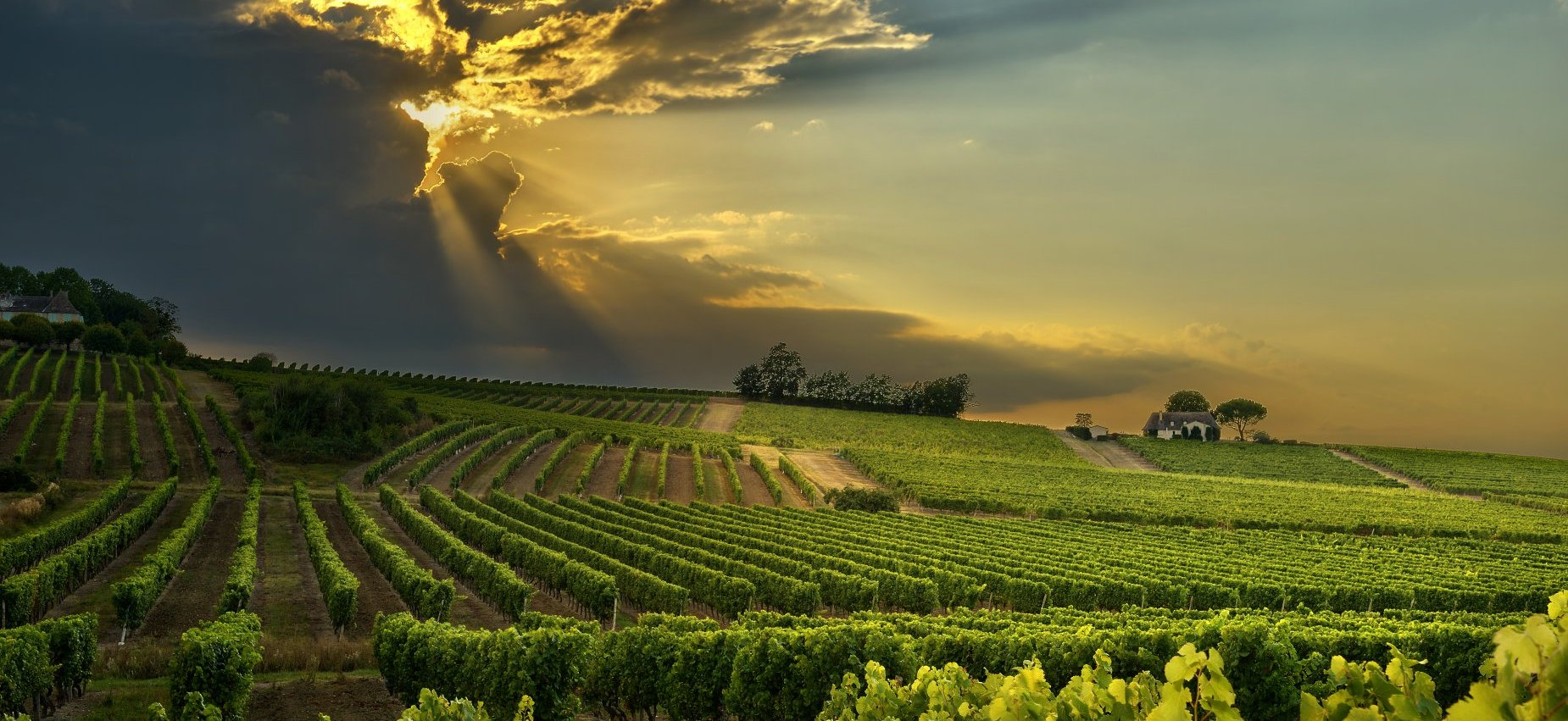 Portugal Wine Country Tours