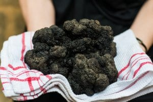 Black truffles of Perigord