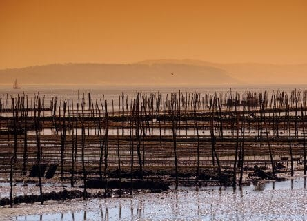 Arcachon, oyster beds