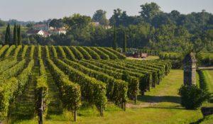 pomerol - pomerol-vineyards
