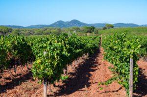 provence - cotes-de-provence-vineyards