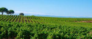 wine-regions - coteaux-d-aix-en-provence