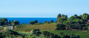 wine-regions - cotes-de-provence