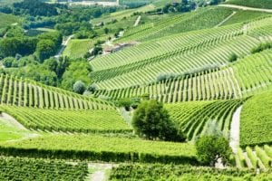barbaresco - barbaresco-vineyards