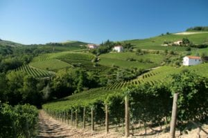 barolo - barolo-vineyards