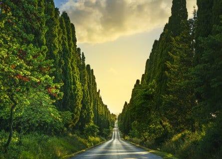 Cypress tree lined roads in Bolgheri