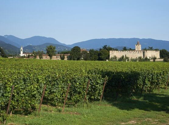 Franciacorta Wine Tour
