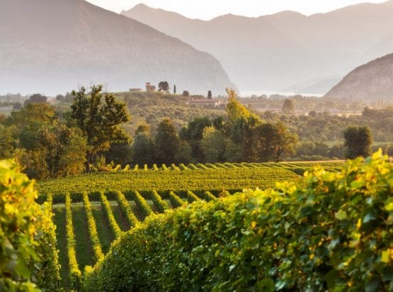 Franciacorta Wine Tours