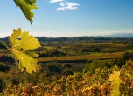 Friuli Collio Vineyards