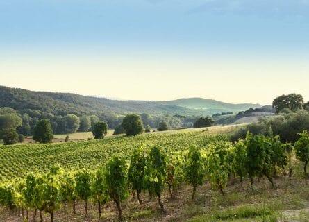 view of vineyards from Salcheto winery