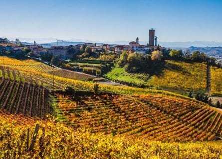 Barbaresco vineyards in the autumn
