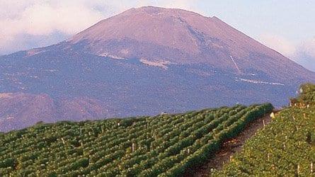 De Falco vineyards, with Vesuvio in background