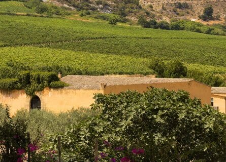 Planeta winery