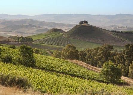 Vineyards surrounding Tasca D' Almerita winery