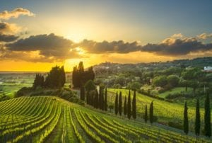 siena - tuscany-vineyards