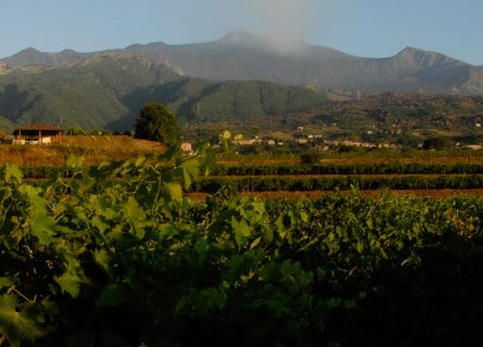 Murgo winery in the shadow of Mt. Etna